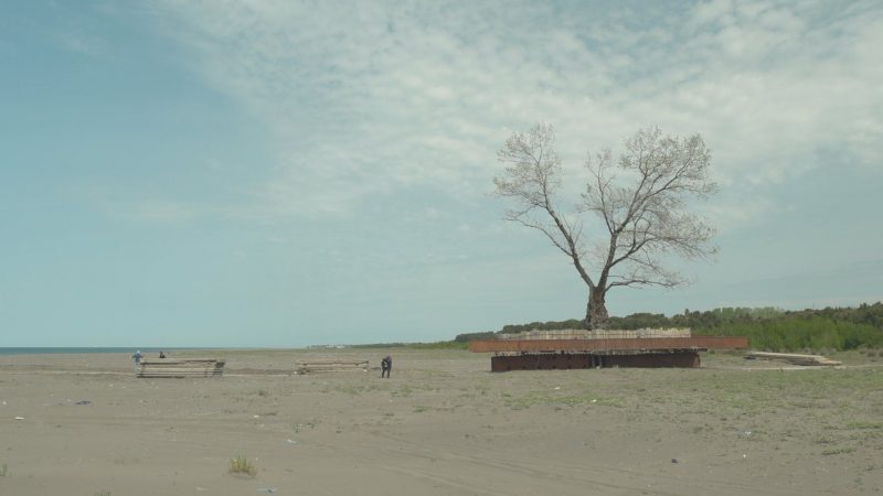 TREES_still_06